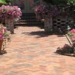 patio-petunias-in-princeton