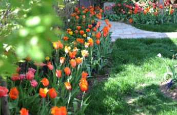 tulip-landscaping-ewing-tal